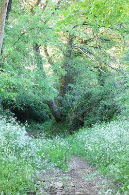 Chemin-creux-de-la-Pinelais---Montfort