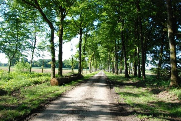 Domaine des Hayes_Maxent_Appartement_chemin