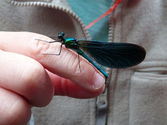 Insectarium de Lizio - Morbihan - Bretagne