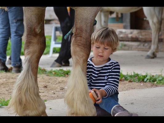 Lung Ta chevaux en liberté web - Sérent