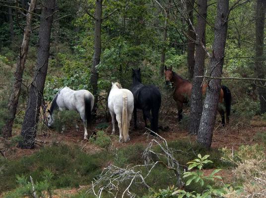 Lung Ta chevaux en liberté - Sérent