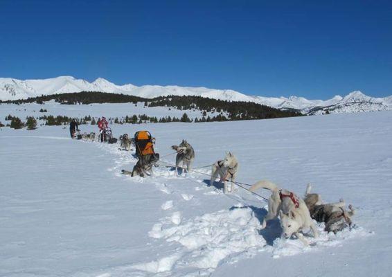 Initiation conduite attelage Nordican Pyrénées