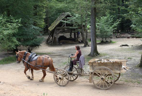 Paloma attelée au tombereau transporte des chutes de bois
