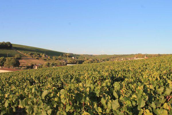 Visuel-3--Vignes-Alain-Geoffroy