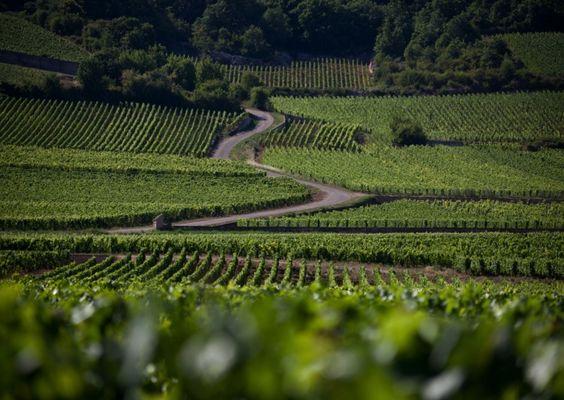 Chemin dans les vignes