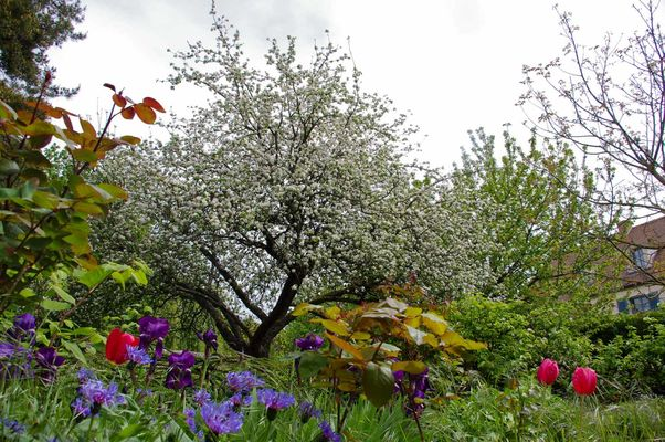 Le Grand Jardin en fleurs