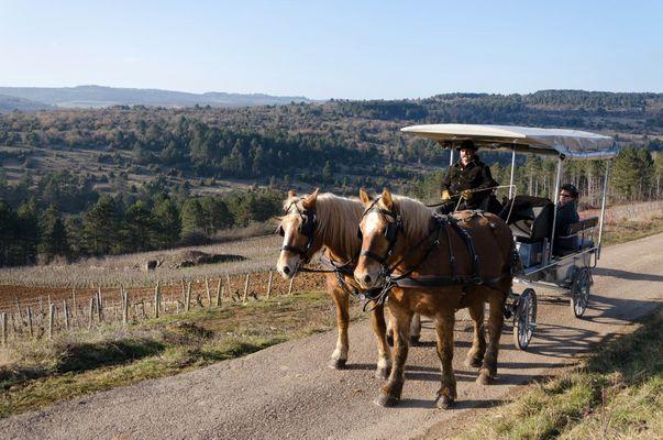 excursion coteau de Pommard