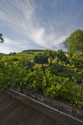 Vue colline de Corton