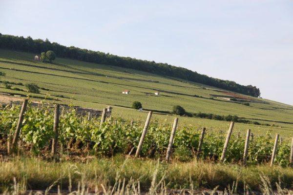 Le vignoble bourguignon