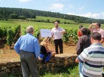 Ecole des Vins de Bourgogne vignes