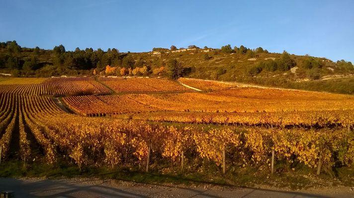 couleur d''automne