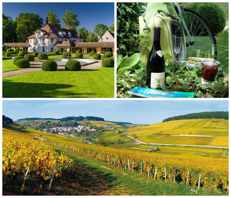 Collage Route des grands crus