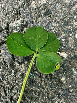 luck-978540-1920-260612
