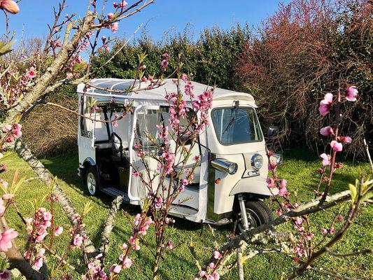 tuktuk-cerisier-259146