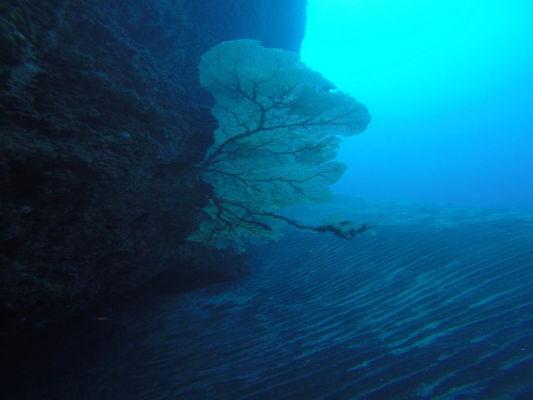 Plongée Salée