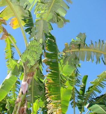 Bananaland - Domaine d'Aldachris & Bananaland