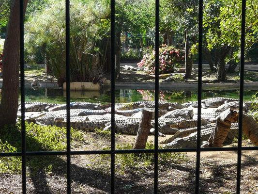 Croc Parc