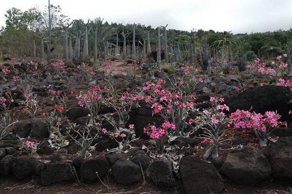 Jardin Naturel (Le)
