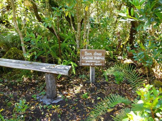 Jardin Botanique du Piton Bétoum