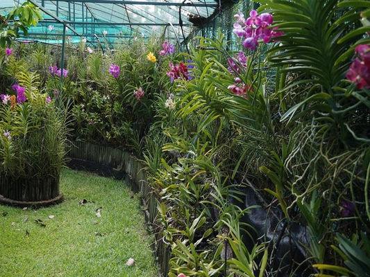 Jardin de Vandas