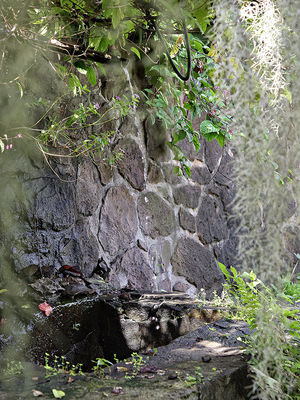 Jardin de la Maison d'Edith bassin - Jardin de la Maison d'Edith (Le)