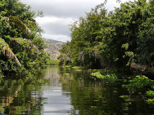 - 1 etang - Réserve Naturelle Nationale Etang de Saint-Paul