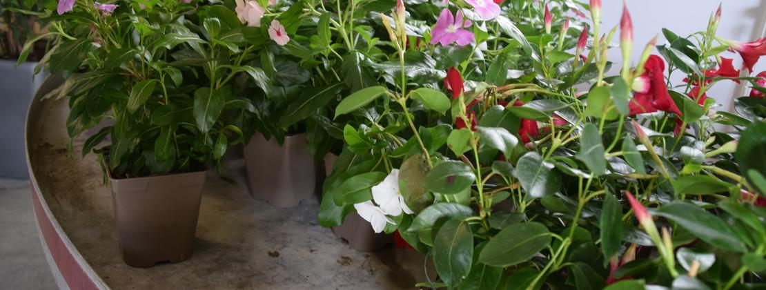 Fleurs. CP Ambre Cnudde (1).JPG