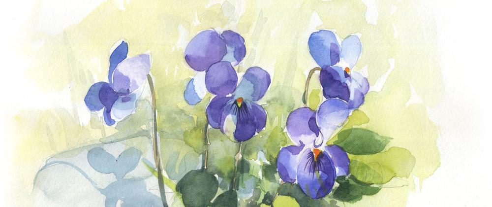 3+violettes+15_1000pix.jpg