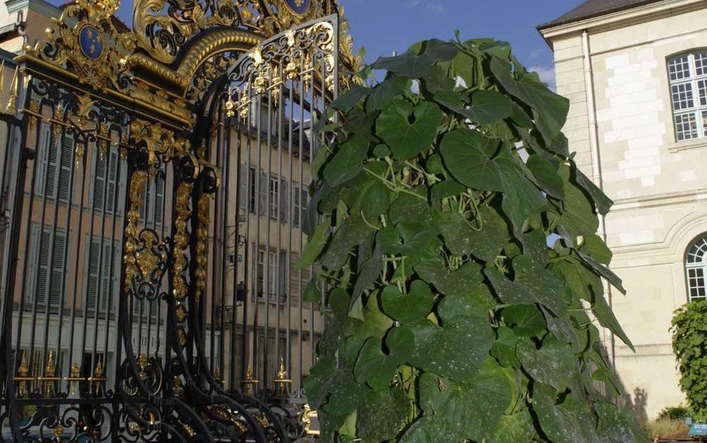 Le jardin des plantes m dicinales troyes troyes champagne tourisme - Le jardin des fleurs troyes ...