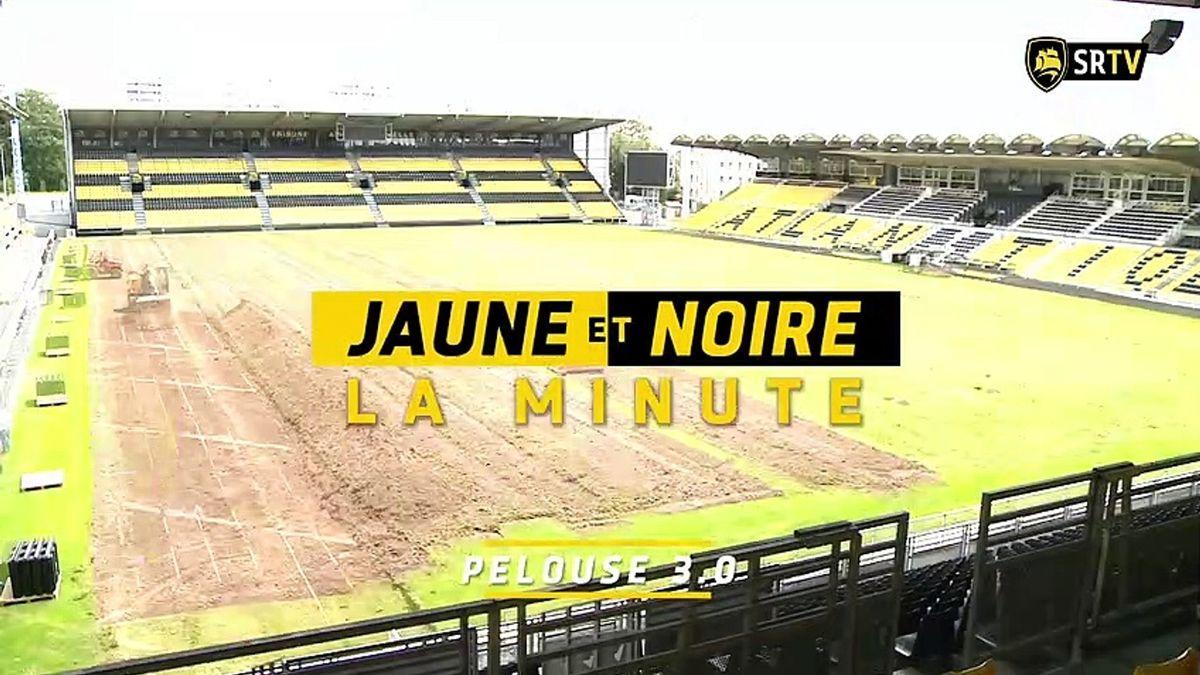 Minute Jaune et Noire - Pelouse 3.0