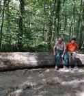du forestier à la scierie.jpg