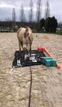 travail du cheval en ethologie photo de Pinel Pauline.jpg