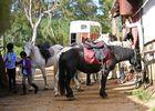 zarlor quiétude à cheval pack 3.jpg