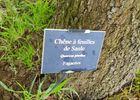 Arboretum - La Bussière ©OTVG (10).jpg