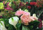 Fleurs-d-Acanthe-saintmartindere-iledere-joli-bouquet-6.JPG