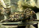 Zoo_PontScorff (8).jpg