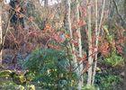 jardin-cistus-betula.jpg