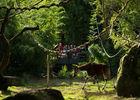 Okapi © Bioparc - L. Joffrion.jpg