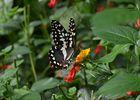 jardin-papillons-vannes (7).JPG