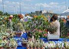 les floralies_web3.jpg