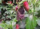 jardin-papillons-vannes (1).jpg