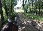 Centre_equestre_Ecuries_Leigne_les_Bois (3).jpg