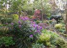 jardin-cistus3.jpg