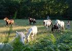 Centre_Equestre_Crinieres_Ouest_Lanvenegen (3).jpg