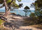 arbres et plages île de Ré.jpeg
