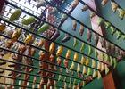 jardin-papillons-vannes (5).JPG