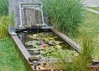 bassin aux nénuphars.jpg