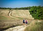 Sur le chemin de St Jacques en Quercy Blanc--© Lot Tourisme - C. ORY-2.jpg