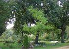 Arboretum3-sit.jpg