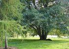Arboretum2-sit.jpg